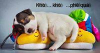 Phi Dao
